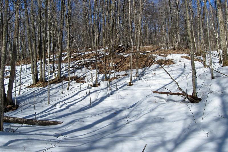 Lost Tamarack Pathway