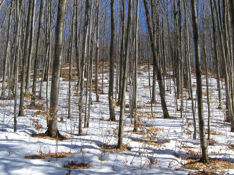 Despite my dislike of the lingering snow pack there is something enjoyable about the early spring woods...