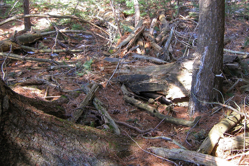 The trail along the north shore of the unnamed lake was in particularly rough shape...