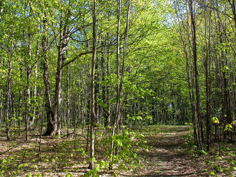 Hardwood Hike Trail