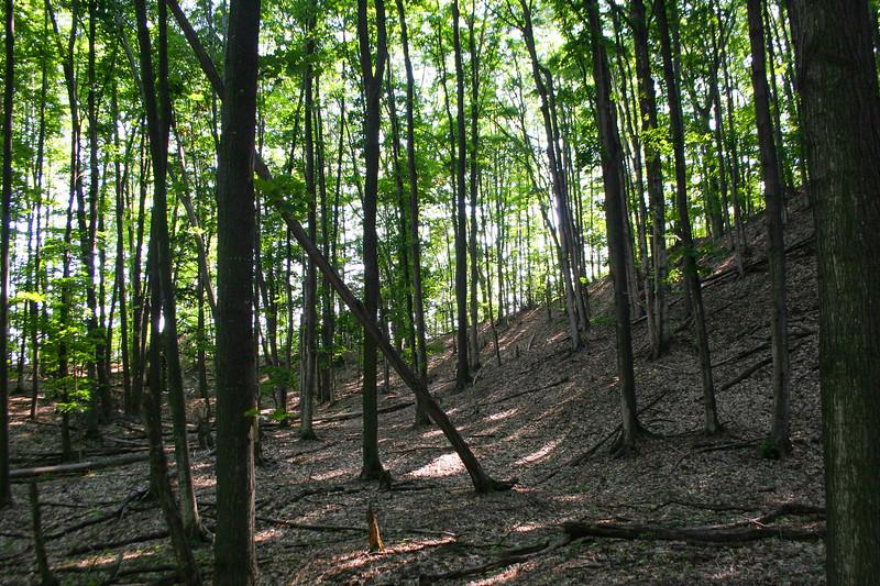Pothole Ridge Trail