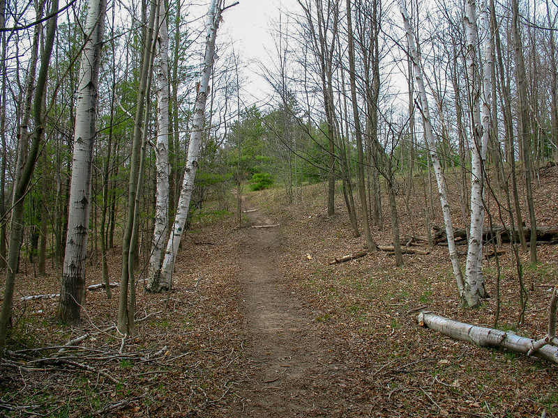 NCMC Preserve Loop Trail