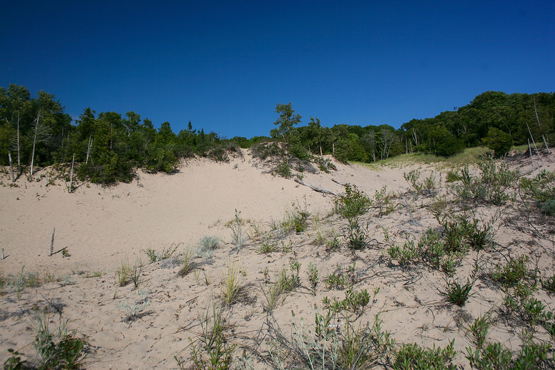 There are some huge blowout dunes making their way back from the lake along this stretch of shore...