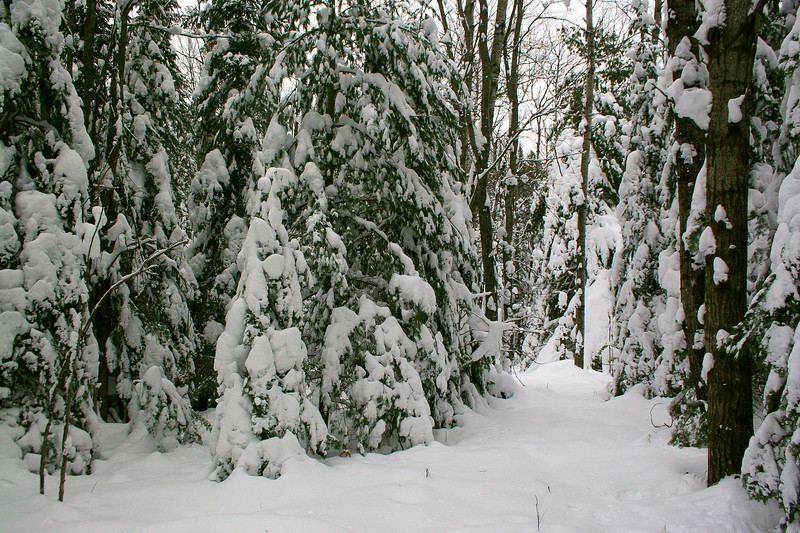 The snow-covered pines literally walled me in at times...