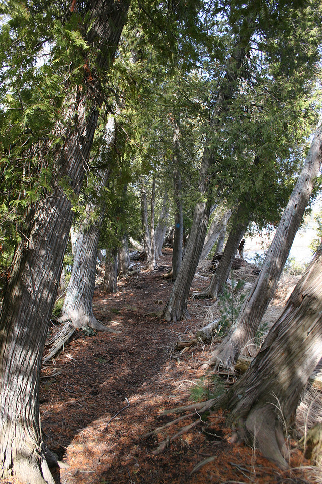 Between the Cedars on the way out to the island's tip...