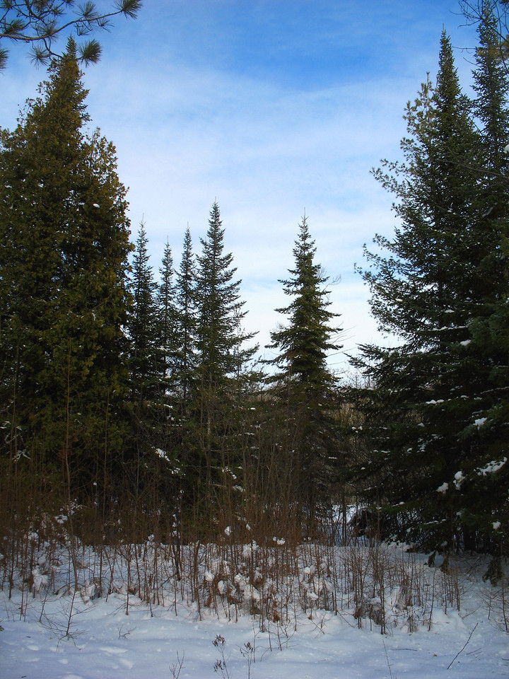 Looking through the bare branches of the Tamarack, the only conifer which drops its leaves in the winter.