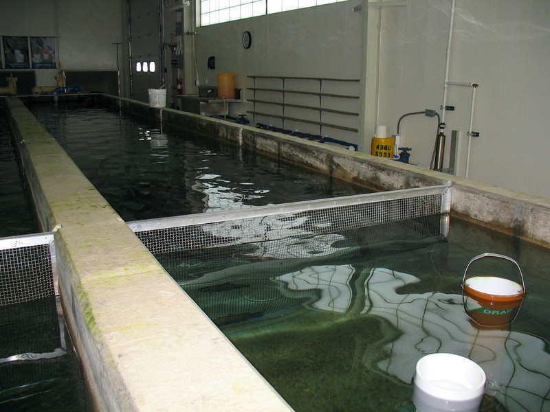 Water is pumped in from the far end flowing down the main part of the tank where the fish are held to the tubes in the foreground. Some of the water entering the tubes is re-used and pumped back around to the other end...quite efficient I might say!