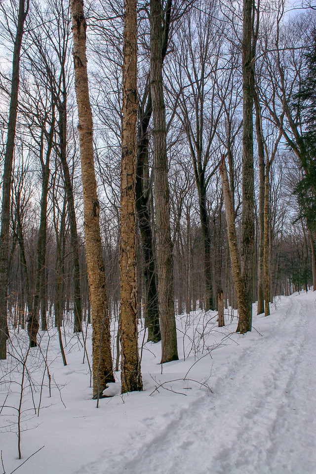 """This was about as """"yellow"""" a Yellow Birch as I've ever seen..."""