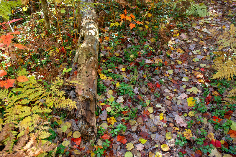 The forest floor is becoming a kaleidoscope of color...