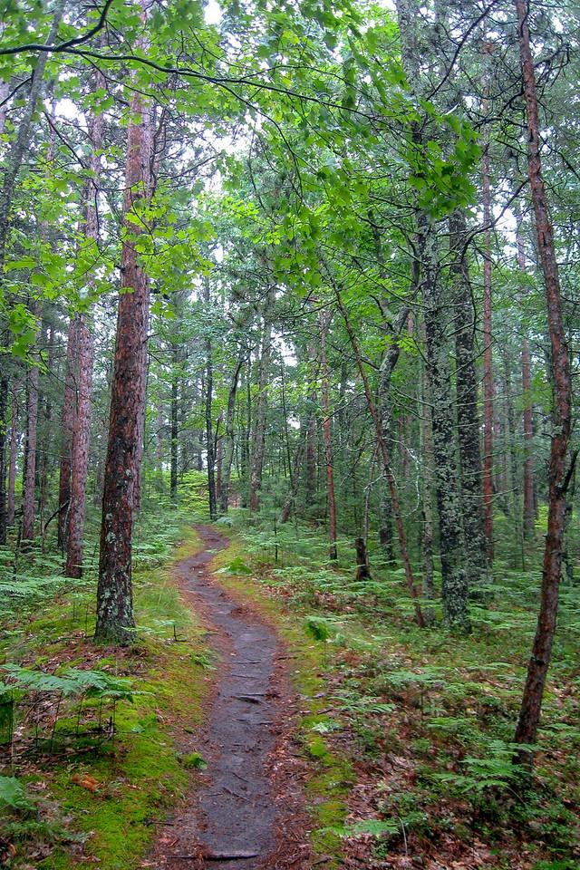 A serene, albeit still buggy, bit of trail...