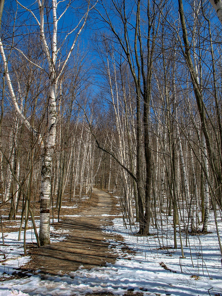 Still a bit of snow on the trail but no snowshoes required...