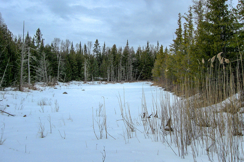 A series of these shallow, narrow ponds sit in the depressions between old lakeshores just inland from Ferron Point...
