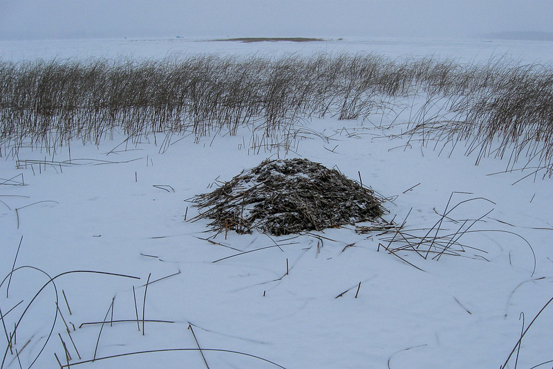 This odd pile of reeds is a nest of some sort...