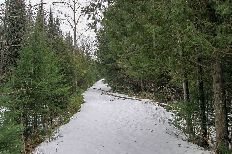 My route started out along this narrow trail road which barely showed up on my satellite map...running along the southern boundary of the preserve, this trail saved me from much of the bushwhacking I would have had to do to reach the lake shore...