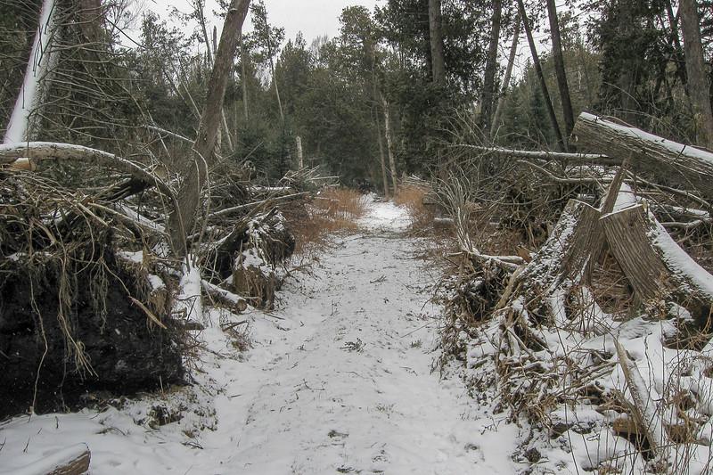 At last, a trail!!