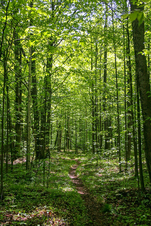 Man, I love spring inthe North Woods...nothing but green from top to bottom...