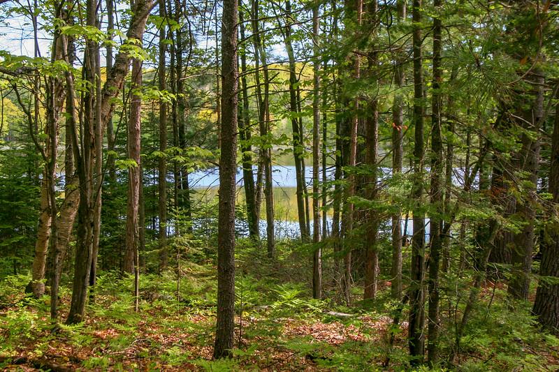 Grass Lake Bushwhack