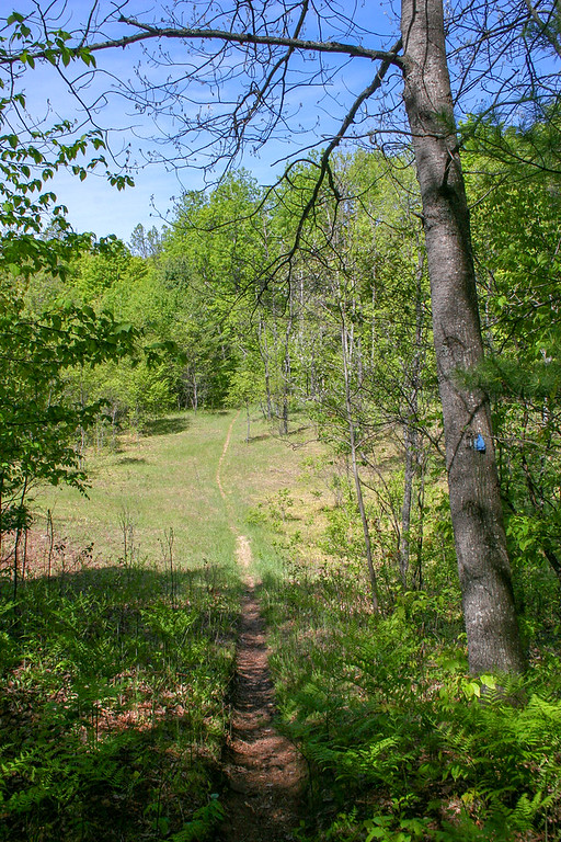 I crossed a couple of these open areas as I neared the Pigeon River...possibly old homesteads?