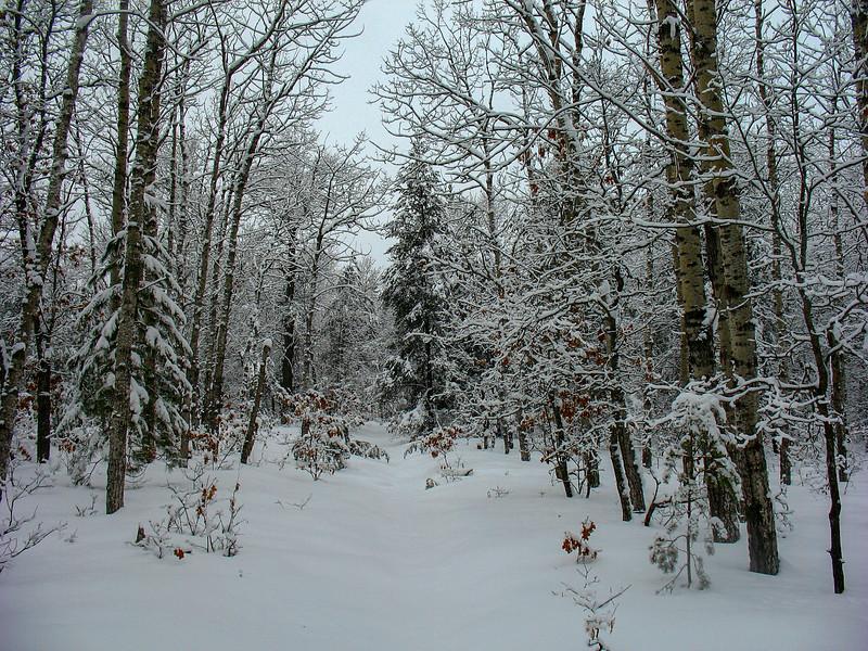 Old Logging Road...
