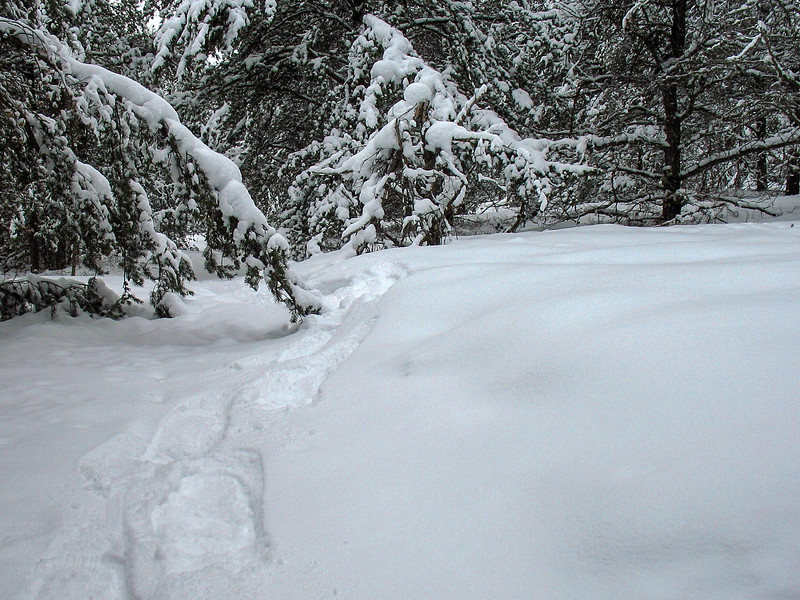 Under the pines there was only a few inches, in clearings it was well over a foot deep.