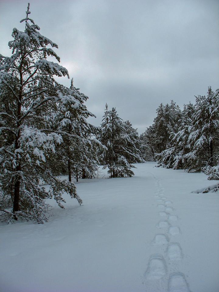 Winter Stillness...