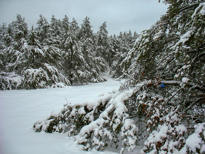 Trail markers were far and few between through the Jackpine clearing...