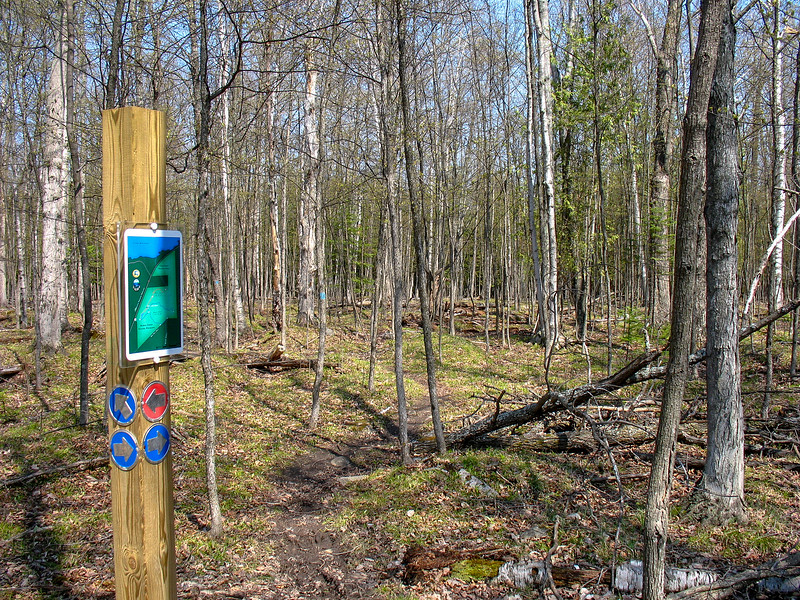Red-Blue Cutoff Trail Junction