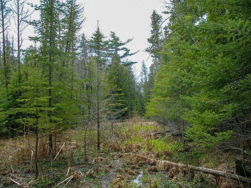 Cedar Trail