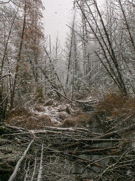 Warner Creek Pathway