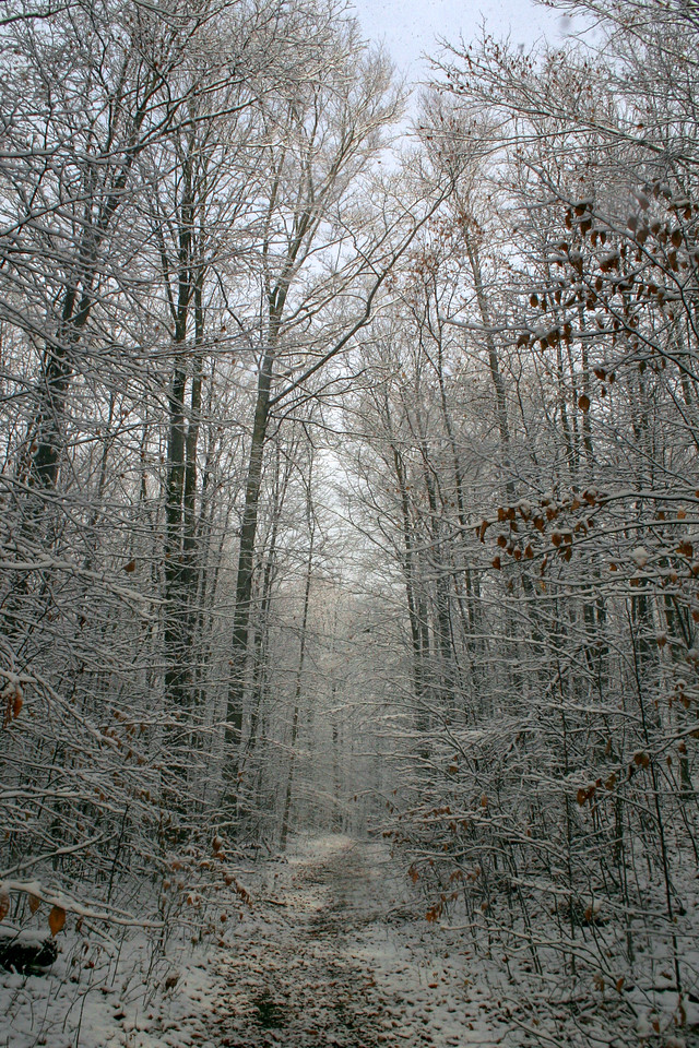 Typical of lake effect...the sun shines in the tree tops while the snow continues to come down...
