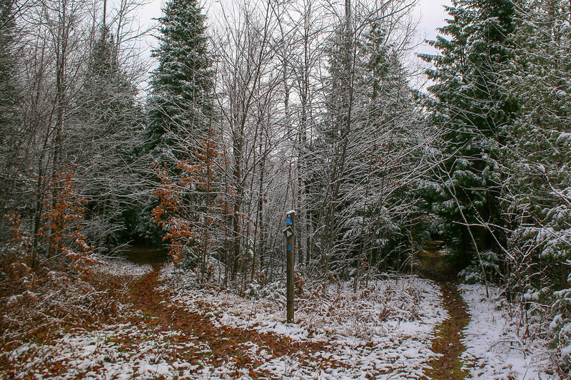 Warner Creek Pathway-North Country Trail Junction