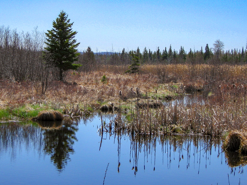 The south end of Goose Pond is fed by a number of small streams which emerge from a series of old beaver dams...