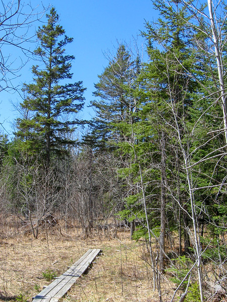 Red Pine Trail