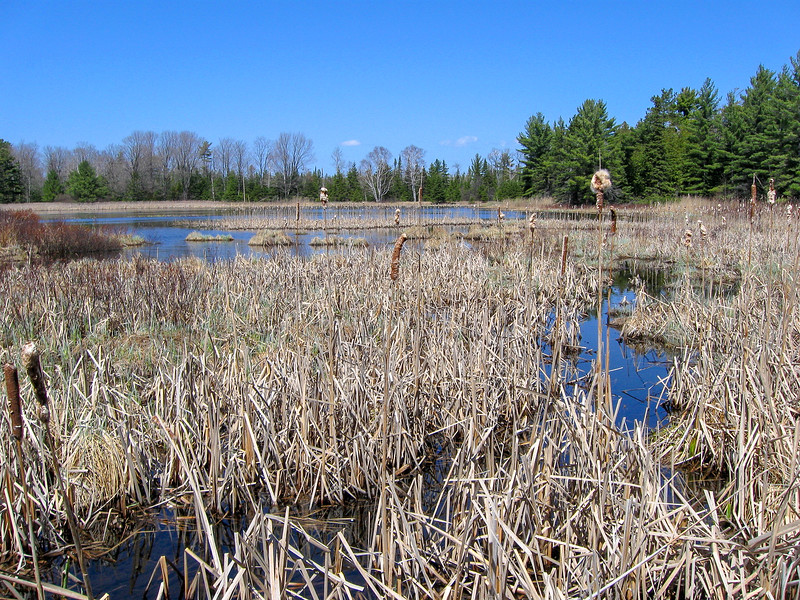 The south end of Goose Pond...