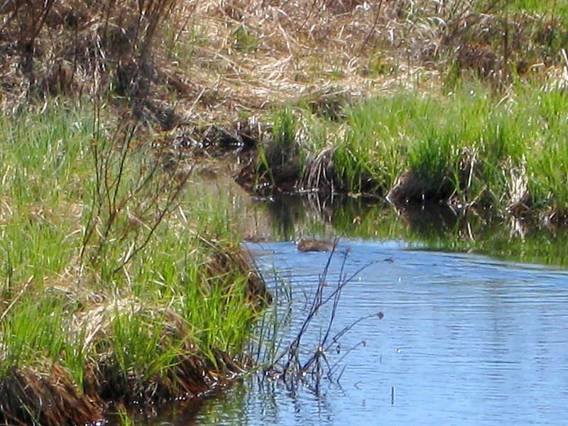 Goose Pond Loop Trail