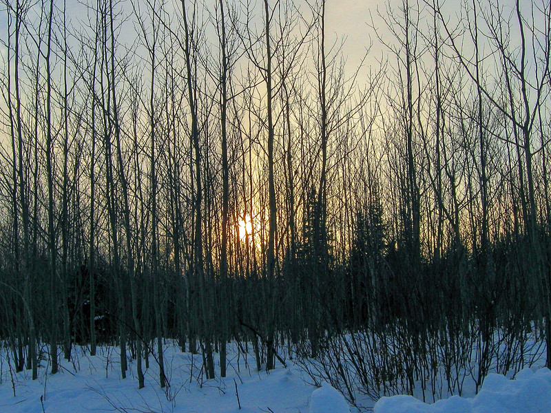 The setting sun through a young grove of Aspen brings an end to a nice afternoon on the trail.