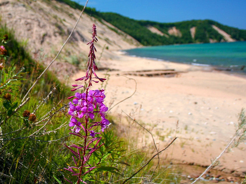 This pretty flower, Fireweed, is found all over the northern Great Lakes usually in disturbed areas. It was a nice surprise to find so much plant life even in such a barren environment...