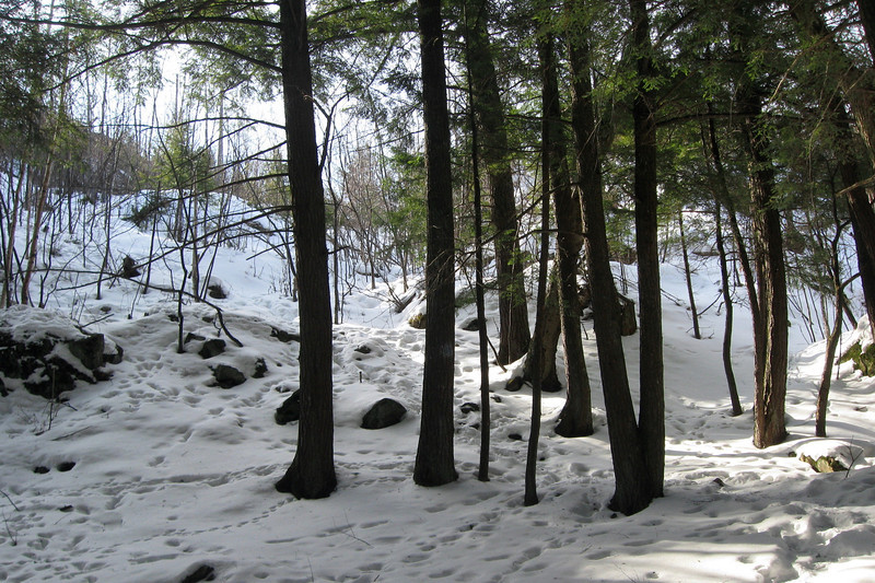 Hogback Mountain Loop Trail - Direct 'Summit' Route