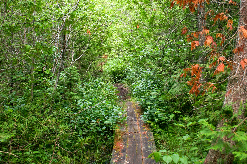 At times the surrounding foliage nearly enveloped the trail...