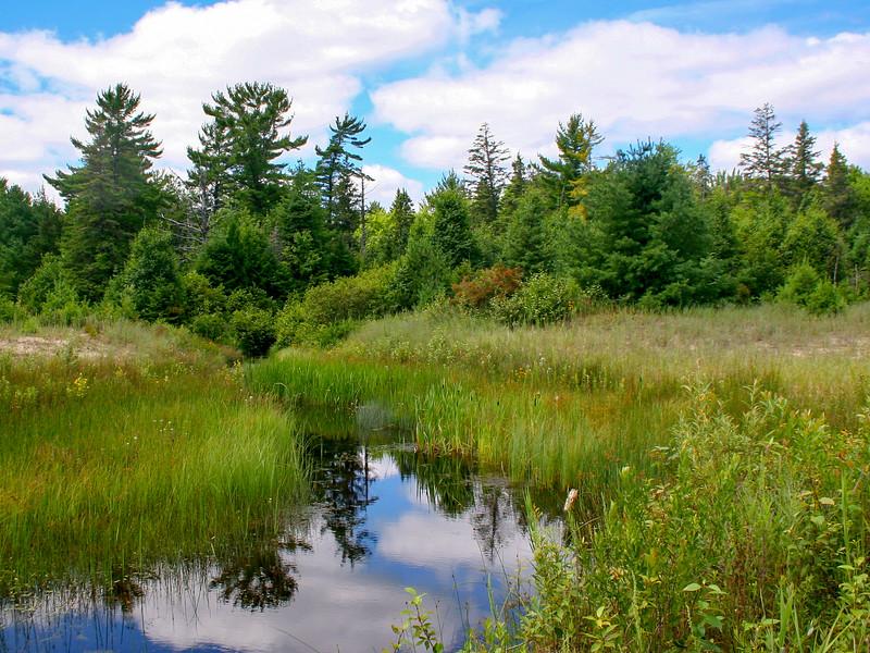 Foley Creek
