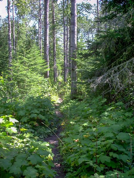 Mount Ojibway Trail