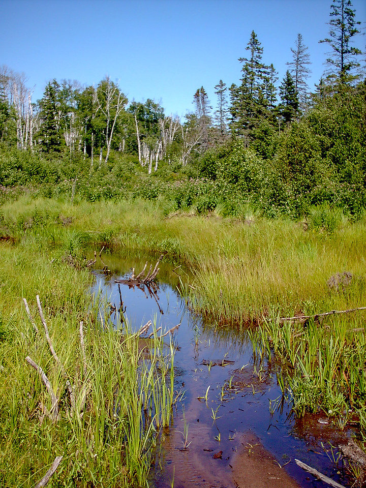 Day 2 - A typical forest scene along the Mt. Ojibway Trail