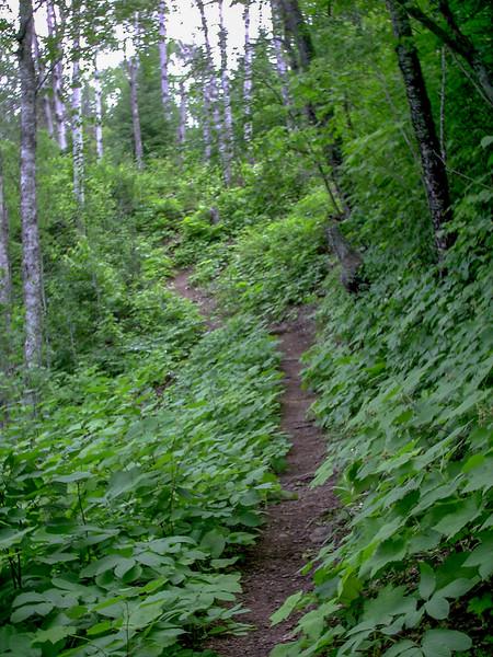 Lane Cove Trail