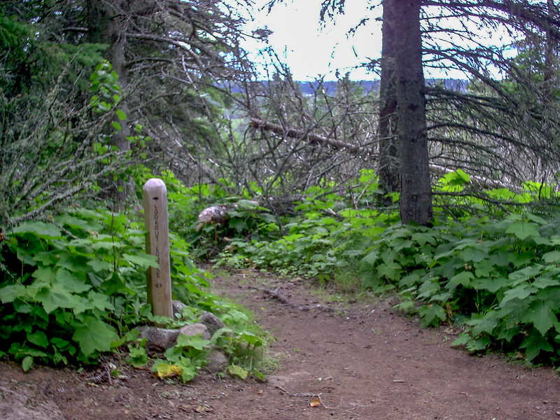 Lane Cove-Greenstone Ridge Trail Junction