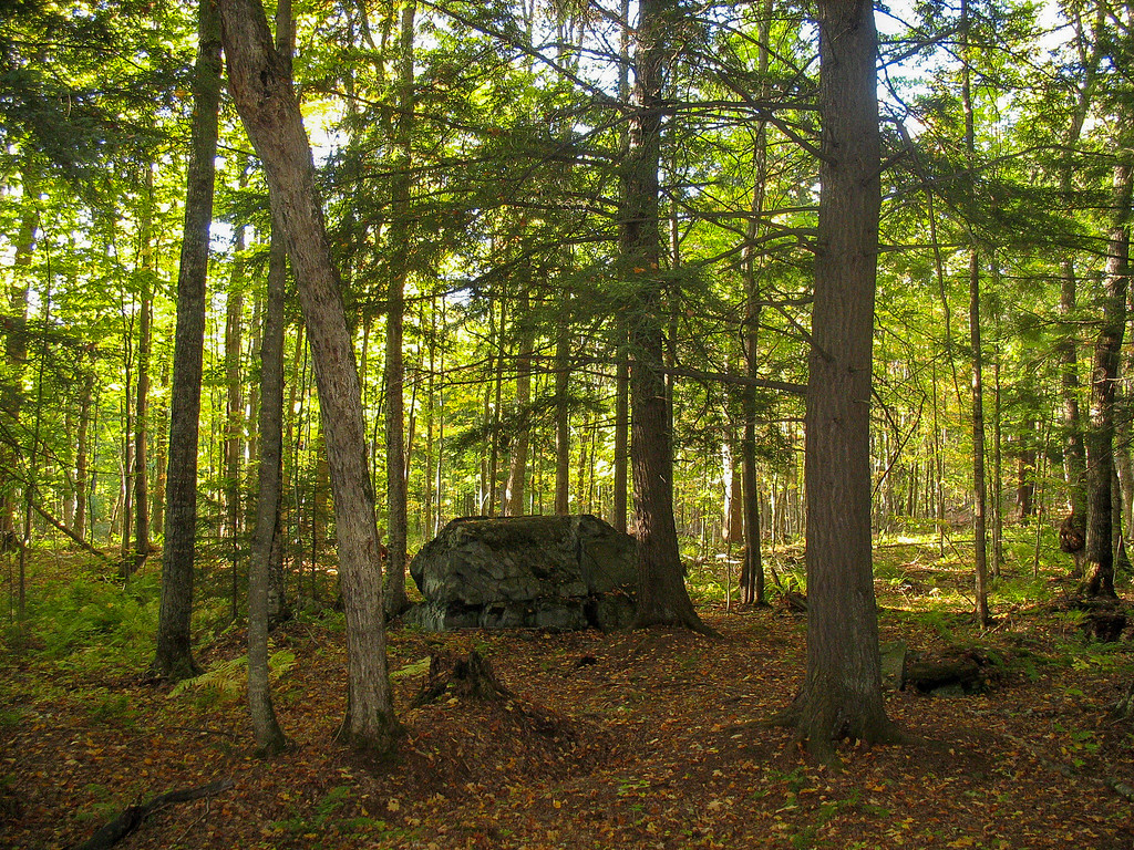 A glacial erratic sitting among the pines...