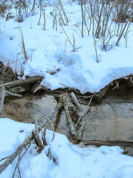 Spectacle Lake Stream Buchwhack