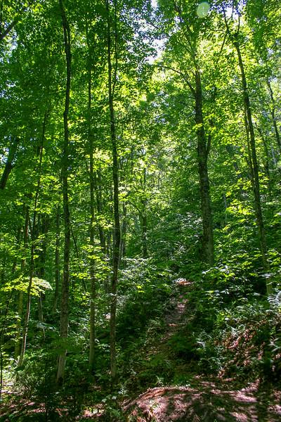 Mission Hill Trail