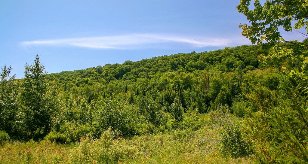 Mission Hill, which I'd be climbing shortly, rises above a marshy field to my left (south)...