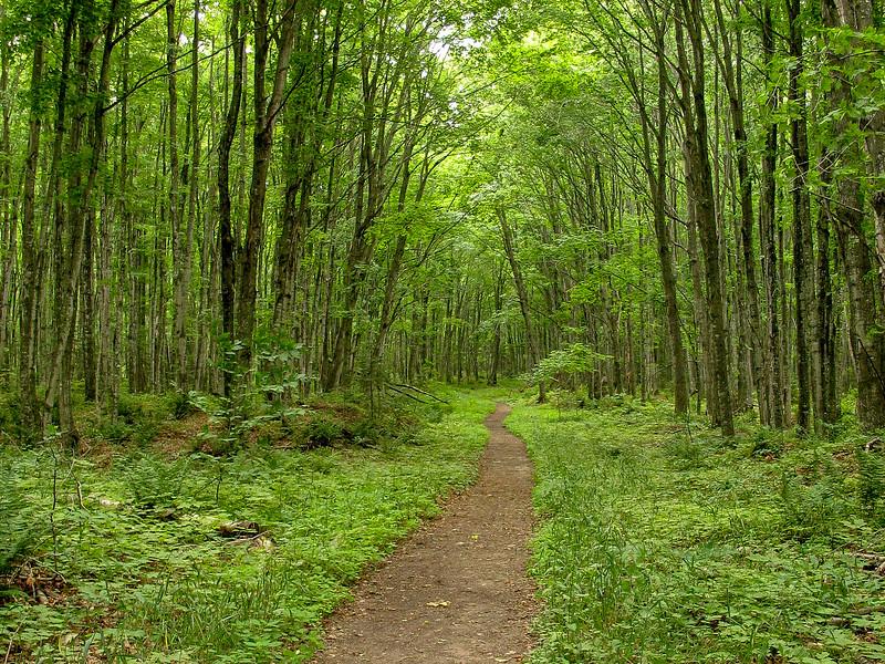 Chapel Loop Trail