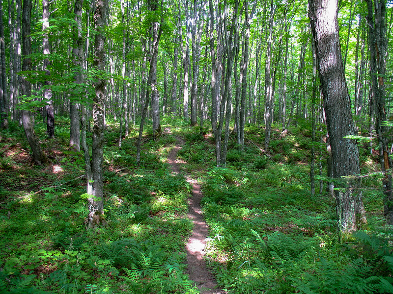 The open deciduous forest is typical of inland locations within the lakeshore...
